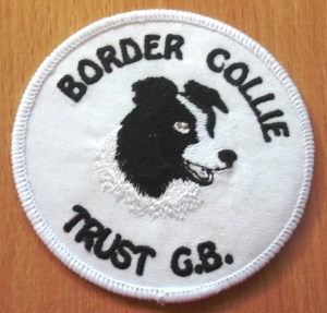 00040 White sew on badge 300 x 287