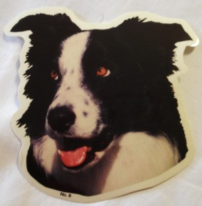 00360 Collie Head Stickerl 295 x 300