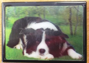 00548 3D Border Collie Lying Magnet 300 x 212
