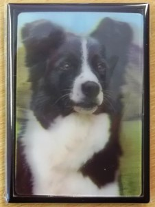 00549 3D Border Collie Hillside View magnet 226 x 300