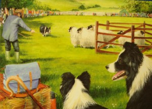 12024 Sheepdog Trials 300 x 216