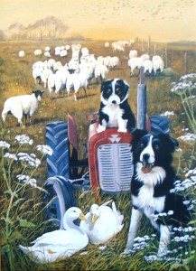 12566 Farmyard Collies blank card 217 x 300