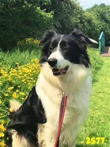 Welcome BCTGB!