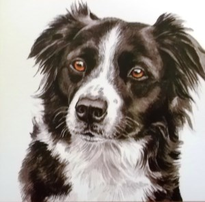 12548 Collie Square Card 300 x 296